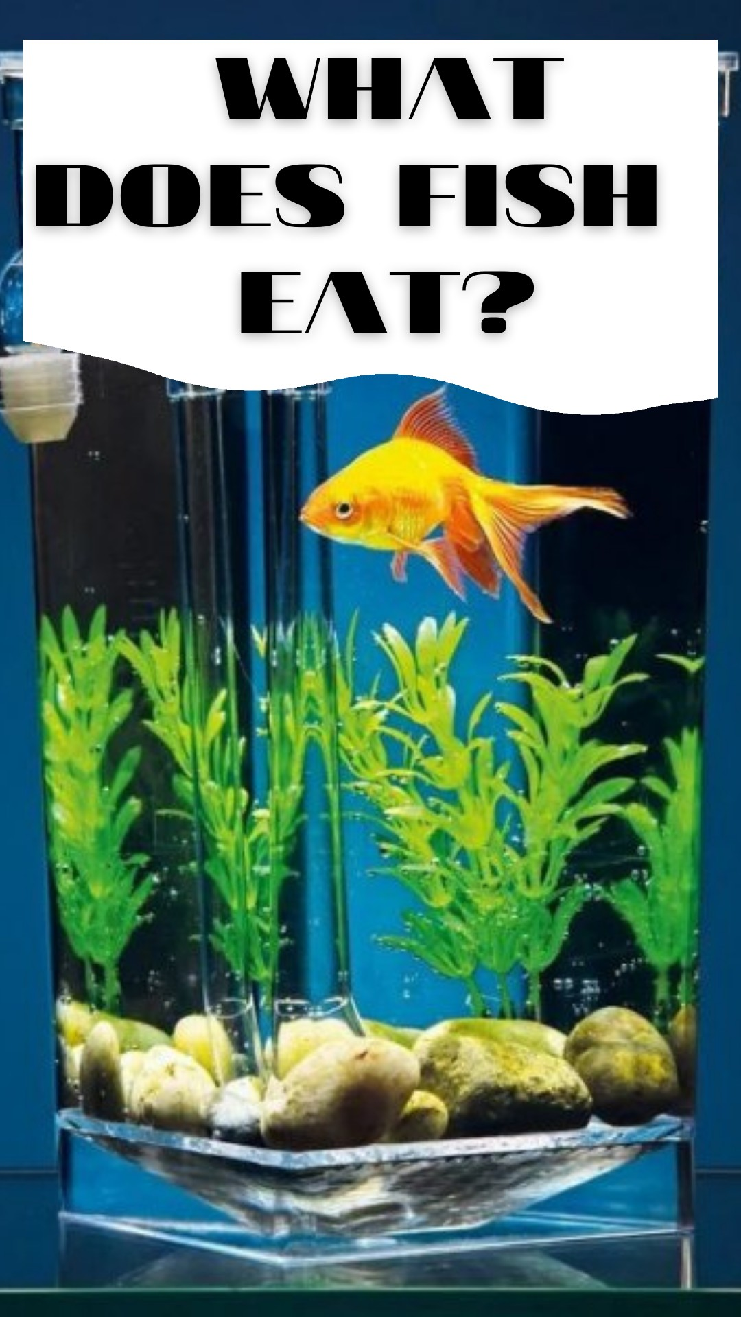 What does fish eat?
